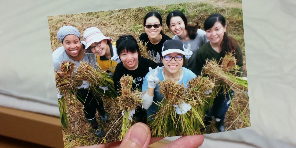 exchange students harvesting rice at AIU