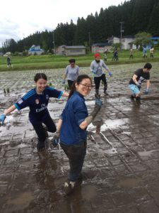 rice planting at Akita International University