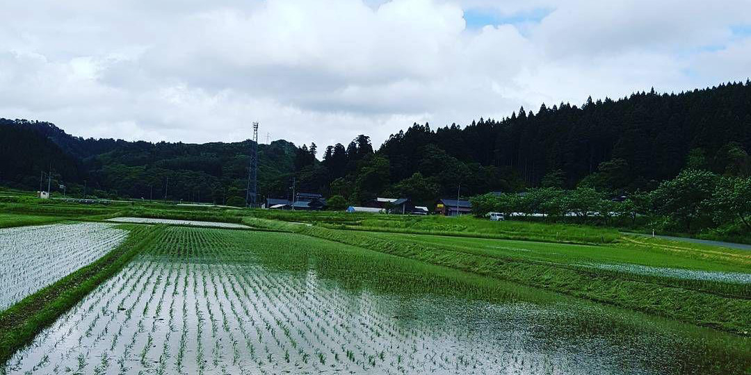 Rice paddy Takinomata