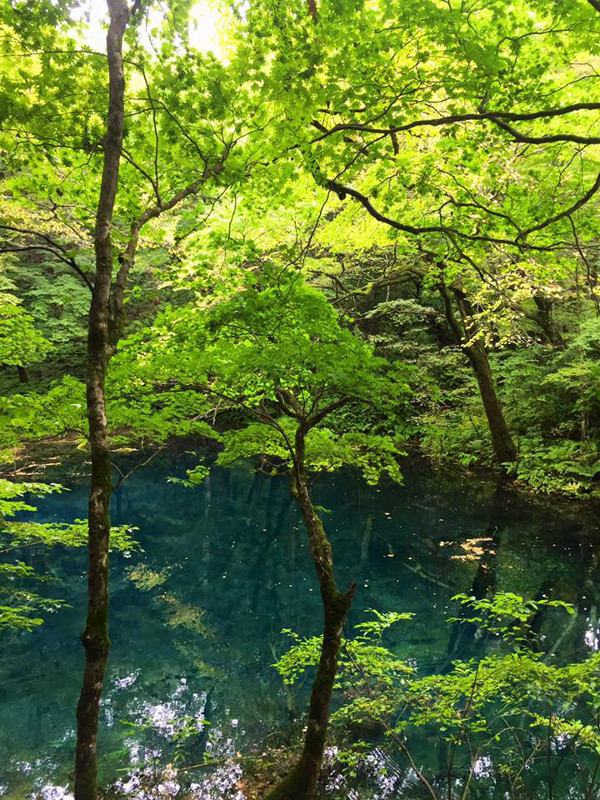 Shirakami Sanchi Akita prefecture trees and lake