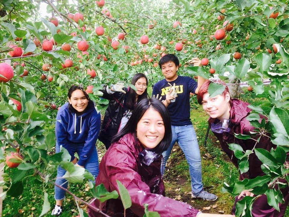 Yokote Apple Orchard Farm Stay Akita International University international students