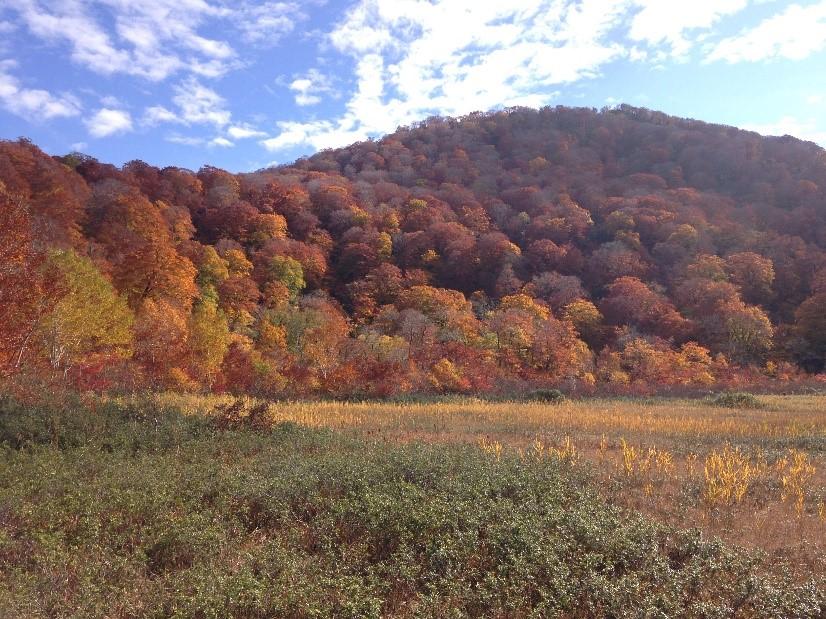 Shirakami-sanci akita international univeristy world heritage site