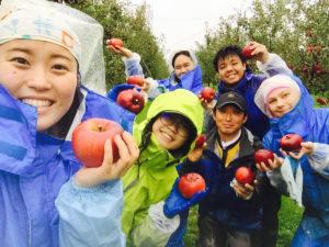 Yokote apple orchard community outreach Akita international university
