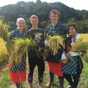 Traditional rice harvest in Akita