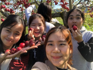 Akita International University students apple picking