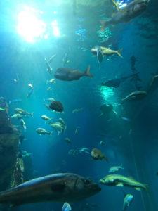 main tank at GAO Aquarium, Oga, Akita