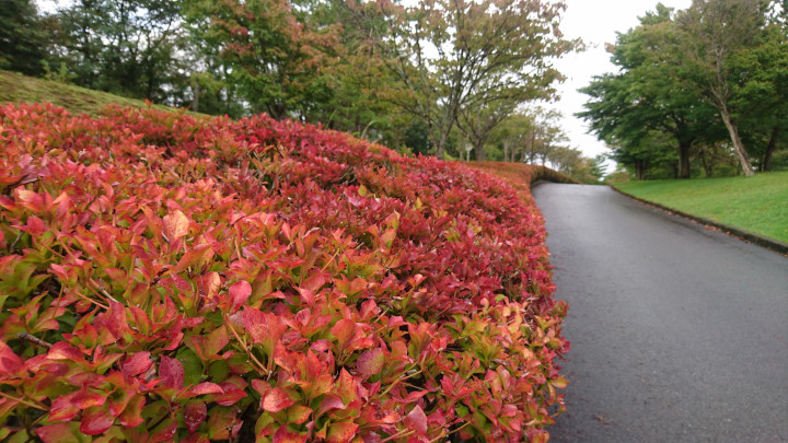 Foliage changing at AIU campus area park
