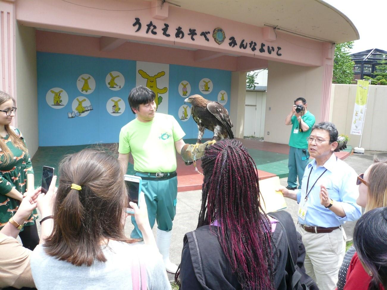 大森山動物園で育てられたイヌワシとの交流の写真