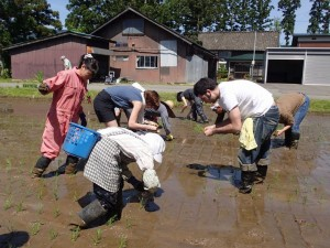 Farming experiences (field marking, rice planting)