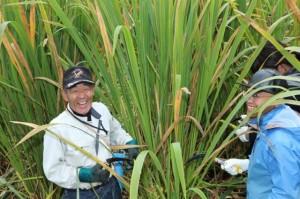 Helping harvest of Makomodake