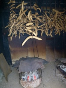 Seeing the smoking of Iburigakko (smoked pickles)