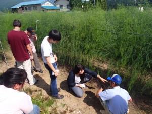 アスパラガス栽培の調査