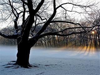 snow-mist-morning